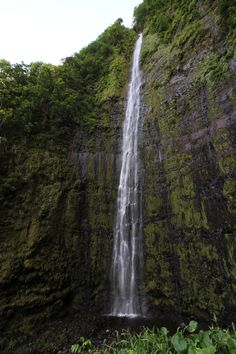 Pipiwai Trail, Waimoku Falls, 1.8 MI one way {bamboo forest, bring a tripod, many pools for swimming and diving, lots of mosquitos}