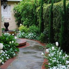 Dwarf Italian Cypress to create privacy hedge in small spaces. They grow 3 feet wide by 30 feet tall.
