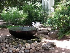 Zen Cat II