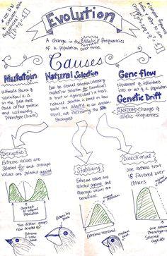 Evolution Part 1 - AP Biology ThingLink