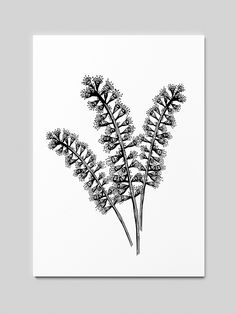 Woodcut drawings of various plants Drawing Sketches, Drawings, Dandelion, Illustrations, Flowers, Plants, Dandelions, Florals, Sketches