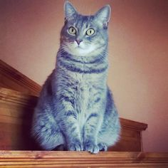 My grey cat Elna looking cute.