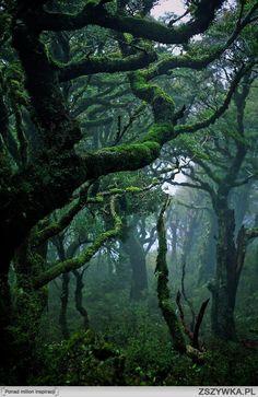 las deszczowy Waikaremoana, New Zealand.