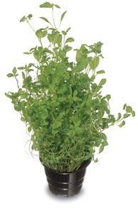 Meirami Plant Species, Growing Plants, Shrubs, Perennials, Trees, Hacks, Gardening, Flowers, Tree Structure
