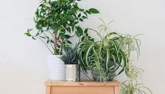 Go green with the three houseplants that will be happy in the kitchen Agriculture, Farming, Indoor Garden, Indoor Plants, Making Hard Boiled Eggs, Foliage Plants, Plantar, Deco Design, Terracotta Pots