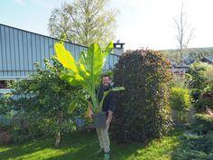 Et hageår er gått, og det nye er allerede i full gang:-) Nye, Plants, Plant, Planting, Planets