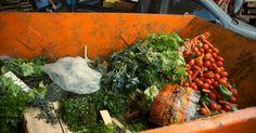Família brasileira joga fora, em média, um quilo de alimentos por dia Um terço de toda a comida comprada no mercado vai parar no lixo. Saiba o que você pode fazer para evitar o desperdício.