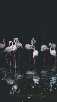 Flamingo, birds, reflections, pond, 720x1280 wallpaper