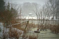 """""""Winter at the Pond"""" Over the fence and through the cattails a late winter snow blankets a Warren County, NC farm.  Photo taken yesterday in Macon, NC.  For more photos please check out my page at Scott Garlock Photography https://www.facebook.com/scottgarlockabandoned and if you like what you see, I sure would appreciate a good old fashioned """"Page Like"""" Thank you - Scott"""