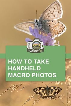 Macro photography tips for taking great photos without a tripod. Learn how to ph. - Macro photography tips for taking great photos without a tripod. Learn how to photograph insects, s - Wildlife Photography Tips, Photography Tips For Beginners, World Photography, Photography Lessons, Photography Tutorials, Creative Photography, Digital Photography, Photography Photos, Photography School
