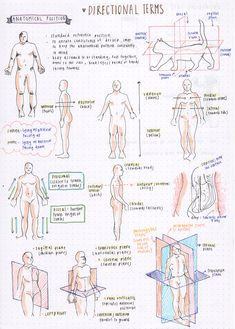 miennstudies - Hey Nurse - some directional terms for anatomy ….all these terms are confusing me haha days - Basic Anatomy And Physiology, Radiology Student, Nursing School Notes, Medical School, Biology Lessons, Human Body Anatomy, Science Notes, Medical Anatomy, Anatomy Study