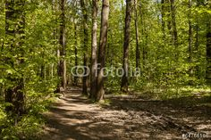 Photo: Green forest with path