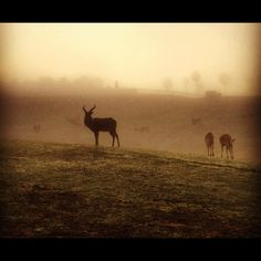 Early foggy morning at the Safari Park among the herds.
