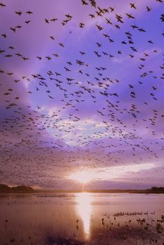 white-fronted geese took off at sunrise  ( by yume on 500px )