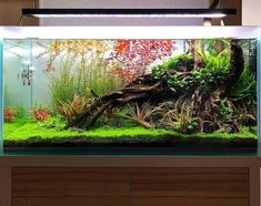 Finding the best betta fish tank is quite a hassling job. This guide will help you to get the dream house for your betta. Aquarium Landscape, Nature Aquarium, Aquarium Fish Tank, Planted Aquarium, Aquascaping, Betta Fish Tank, Fish Tanks, Nano Cube, Paludarium