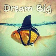 "@bestgymfood's photo: ""‼️ ...... #attitude #befit #betterbody #bodybuilding #dreambody #dream #dedication #discipline #fitmom #fitgirl #fitlife #fitness #fitnessaddict #gains #getfit #gymaholic #igfit"""