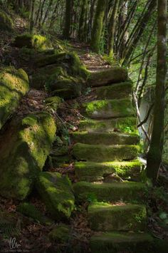 Into The Forest - Mystic ancient path by Juan Antonio Valiño García on Beautiful World, Beautiful Places, Nature Aesthetic, Stairway To Heaven, Old Stone, Abandoned Places, Pathways, Stairways, Mystic