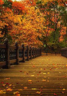 Central Park Manhattan in Autumn, New York City ~ Beautiful!