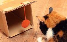 """7 Projetos """"Faça você Mesmo"""" para mimar o teu gatinho"""