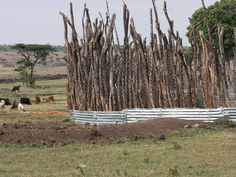 Photo: Reinforced boma fence