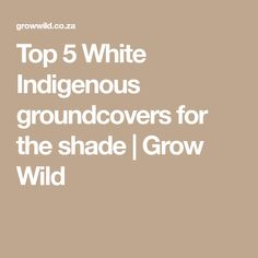 Top 5 White Indigenous groundcovers for the shade