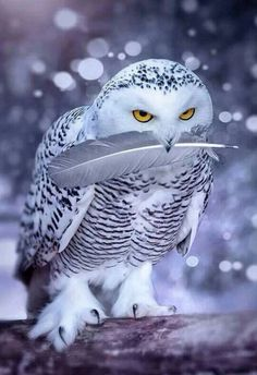 Полярная снежная сова