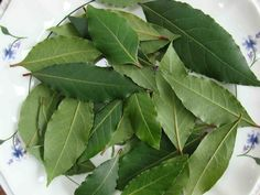 Bay Leaves are terrific for spells cast to bring victory in athletic competition. Bay Leaves also removes negative energy, protects health and gives an impetus to careers and matters of the heart. Health Remedies, Home Remedies, Fresh Bay Leaves, Chest Infection, Laurus Nobilis, Art Rose, Laurel Leaves, Natural Treatments, Herbal Medicine