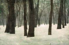 In the Forest by Jamie Heiden :: Black & White Magazine