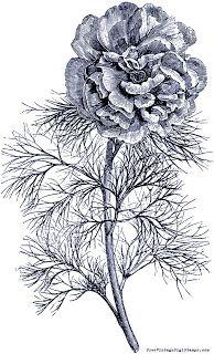 **FREE ViNTaGE DiGiTaL STaMPS**: FREE Digital Stamp - Sweet Flower