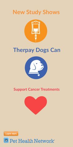 New Study Shows #therapydogs Can Support #cancertreatment  #pethealthnetwork