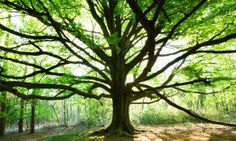 Conscious Death, Sacred Service and Green Burial - Leaving a Legacy of Meaning and Conservation