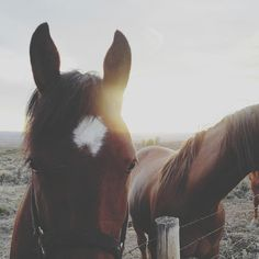 beautiful horses in west virginia. All The Pretty Horses, Beautiful Horses, Animals Beautiful, Cute Animals, Cute Horses, Horse Love, Horse Girl, Equine Photography, Animal Photography