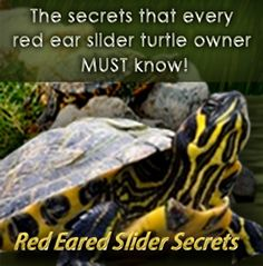 Red Eared Slider - Ultimate Care Guide for Turtle Slider
