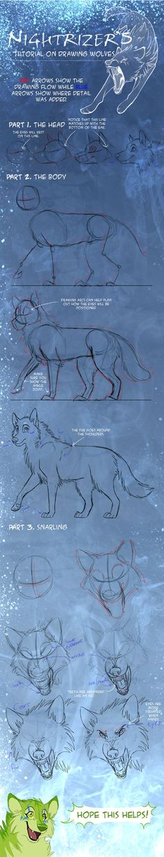 Someone had reminded me some time ago about making this wolf tutorial, so here it is~ Art © Nightrizer Wolf Tutorial Drawing Skills, Drawing Lessons, Drawing Techniques, Drawing Tips, Animal Drawings, Cool Drawings, Drawing Sketches, Sketching, Poses References