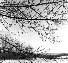 A photograph by monk and mystic, Thomas Merton.  Practice photography ... it helps you see whats around you ... and what's inside of you.