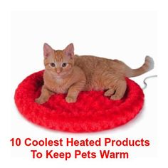 10 Coolest Heated Products To Warm Your Pets This Winter  ... see more at InventorSpot.com