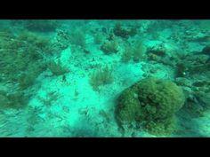 Scuba diving key west Florida. - http://www.florida-scubadiving.com/florida-scuba-diving/scuba-diving-key-west-florida/