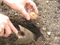 Planter à l'automne, c'est respecter le rythme de la nature, et assurer à tous les végétaux de meilleures chances de reprise