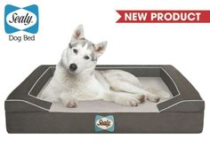 The revolutionary memory foam dog bed from Sealy!  On Sale @Coupaw today in 3 sizes.