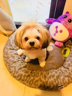 My Children, Dogs, Animals, My Boys, Animales, Animaux, Pet Dogs, Doggies, Animal