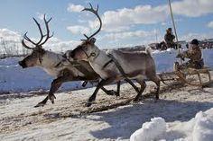 reindeer -   nu trebuie tesalat   poate citeva sute - animal polar  https://www.youtube.com/watch?v=CX-24Zm0bjk