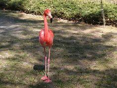 Flamingo im Zoo Rostock.