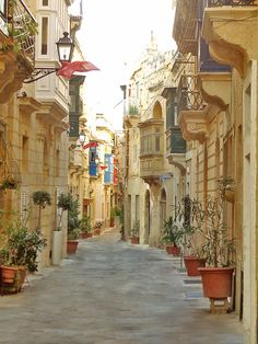 is the only known wild habitat of the maltese everlasting