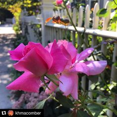 PHOTO OF THE DAY #cambridgema #cambma Huzzah to the flowers that blossom in September. #Repost @khmacomber by charlescherney September 19 2015 at 12:22PM