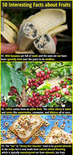 1. Wild bananas are full of seeds and the ones we eat have been specially bred over the years to be seedless. 2. Coffee comes from an edible fruit. The coffee cherry is sweet and tastes like watermelon, rosewater, and hibiscus all at once.