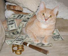 http://cashcats.biz/post/33892445519