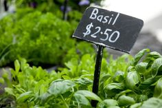 Fresh Basil from Britomart Farmers' Market Fresh Basil, Farmers Market, Place Cards, Place Card Holders, Marketing, City, Cities