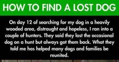 This Man Thought He'd Never See His Dog Again. Then He Followed This Tip And Found His Best Friend.