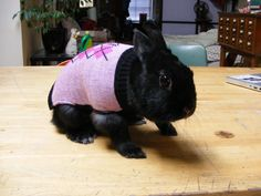 animals wearing clothes   Tumblr
