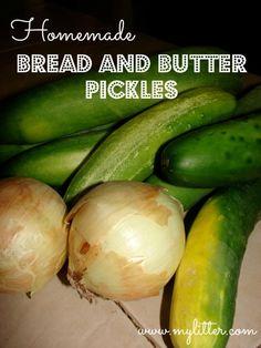 Homemade Bread & Butter Pickles | MyLitter.com